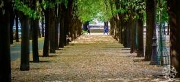 <h5>Esplanade des Invalides, Paris, France</h5>