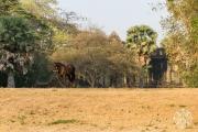 <h5>A waiting horse, Angkor Wat, Angkor, Siem Reap, Cambodia</h5>