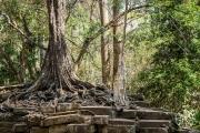 <h5>Man vs. Nature, Angkor, Siem Reap, Cambodia</h5>