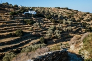 <h5>Terraces of Sifnos, Cyclades Islands, Greece</h5>