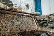 <h5>Cats of Sifnos, Cyclades Islands, Greece</h5>